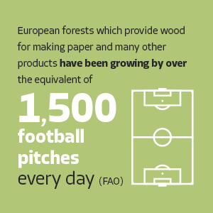 positive-fact-about-paper-industry-tree-growth-woodland